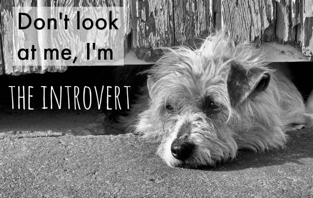 lonely dog introvert