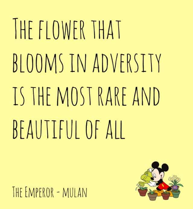 Mulan the flower that blooms
